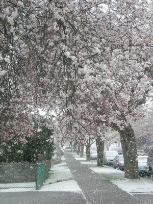 more blossoms and snow