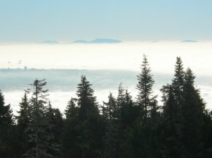 fog_view