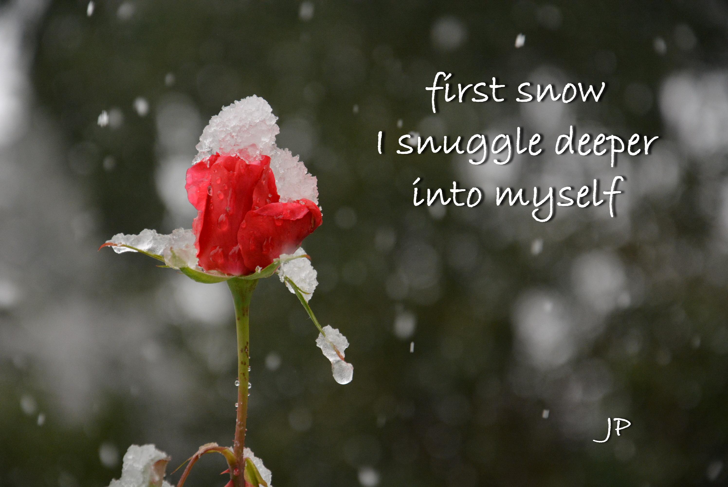 winter rose(2).jpg